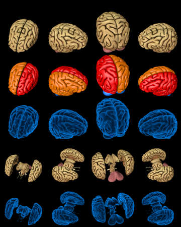 Set of isolated brain renders - whole and split with x-ray examination style image and different colored functional zones, medicine concept - digital 100 MPx medical 3D illustration