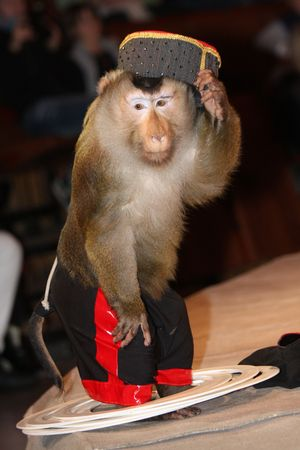 Moscow circus acts monkey. Stock Photo