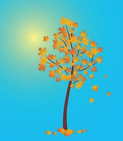 shedding: Autumn tree