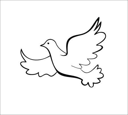 paloma blanca: Dove, ilustración vectorial Vectores