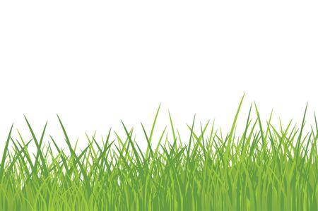 early summer: Grass Illustration
