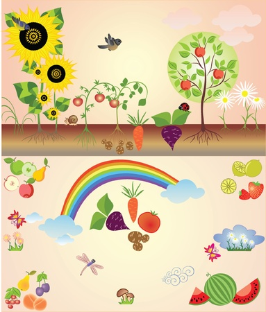 Kitchengarden Vector
