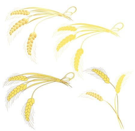 sheaf: Wheat