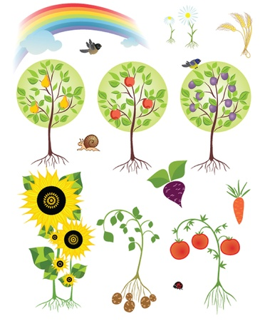 tomtit: Harvest