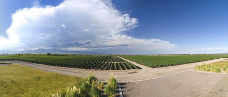Panorama of a large vineyard  in Mendoza, Argentina. photo