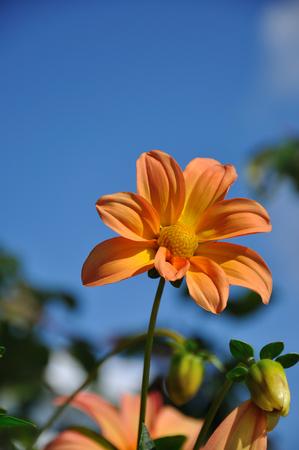 bloem in de hemel