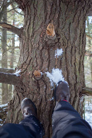Person with feet up againts pine tree in winter on sunny day