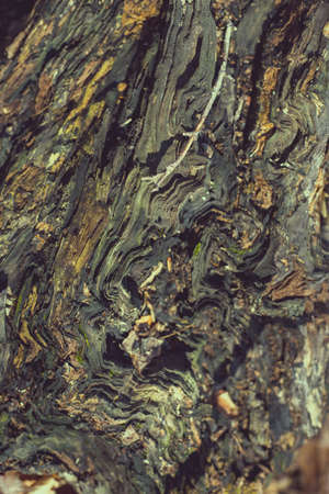 decomposing tree with colorful black and brown texture in macro