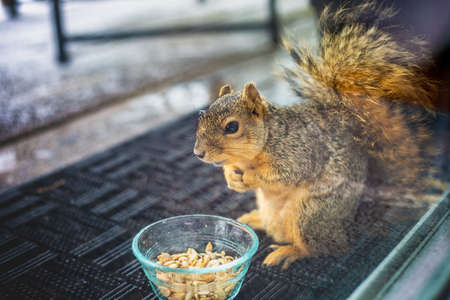 A reluctant squirrel savoring his treasure