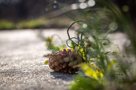 A pinecone and some wild spring onions in a concrete jungle Imagens