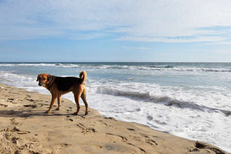 secluded: dog on the shores of the Indian Ocean
