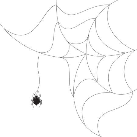 spider spinning a web on white background