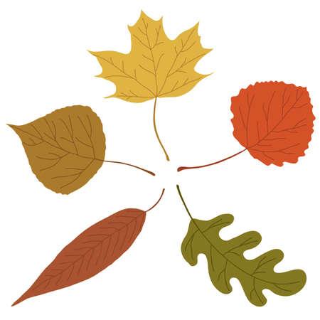Cinque foglie autunnali su sfondo bianco.
