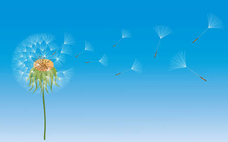 A dandelion in wind on blue background. Vector