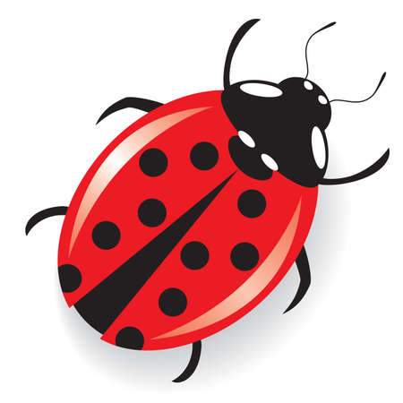 red semi-realistic ladybug.  Illustration