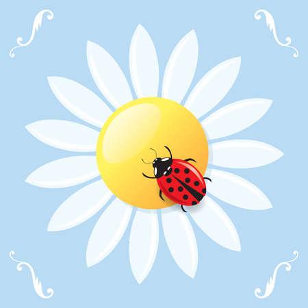 Greeting card with a ladybird on a daisy. Stock Vector - 9104876