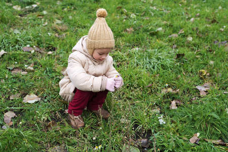 Little girl picking up last autumnal flowers Stock Photo