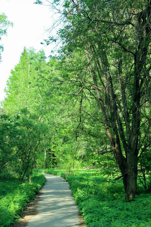 scamper: Pathway in the forest stretches to the left