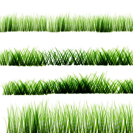 sedge: Green grass on isolated transparent background