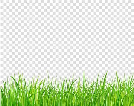 Frontière d'herbe verte, illustration vectorielle