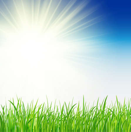 Green background with sun and grass, vector spring background - Vector. Sunny natural with sun and grass.