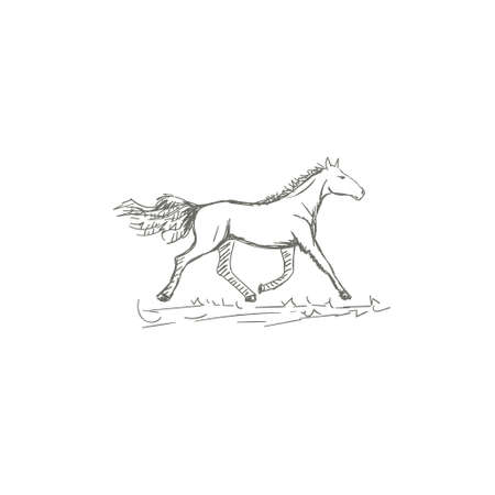 Set of hand drawn horses, vector illustration, sketch