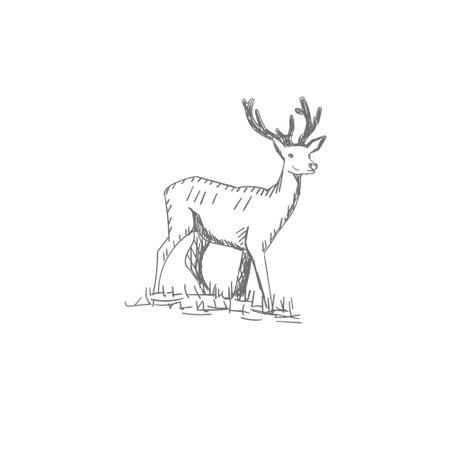 vector vintage styled engraved hand drawn deer animal hunting season