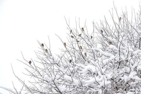 Branches of bushes in snow in the winter in cloudy snow weather.