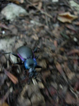 Running Bug Фото со стока