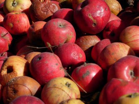 A mass of apples