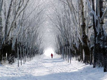 One man in red coat walking snowy forest lane Stock Photo