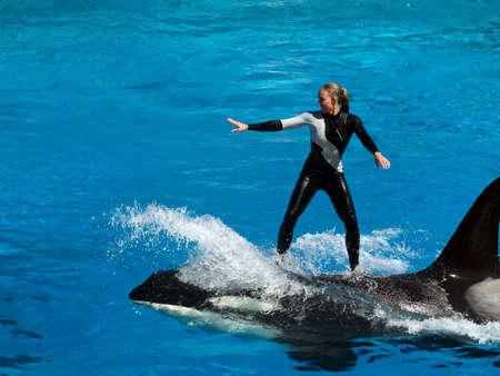 San Diego, Californie, le 6 octobre 2008 : performances Orque dans le parc aquatique de Sea World