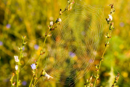 Spider Web with droplets