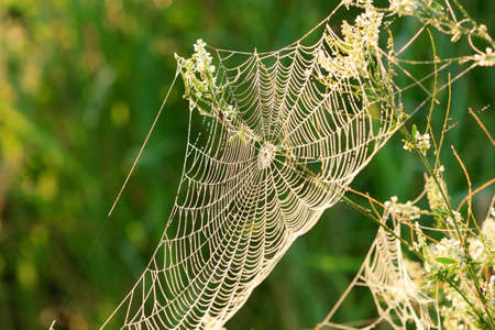 Beautiful spider web with droplets daytime outdoors