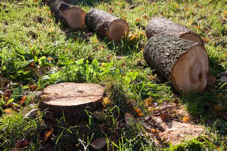落とされた葉によって囲まれた緑の芝生の上、切り株があります。