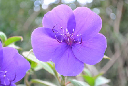 purple colour flower with leaves