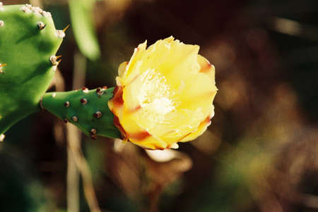 cactuses with yellow and red mixed flower