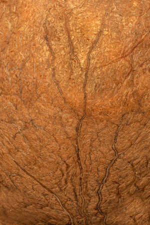 Wood fiber texture of nutshell, closeup, gold-brown background