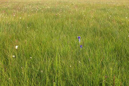 Green grass meadow with flowers, background