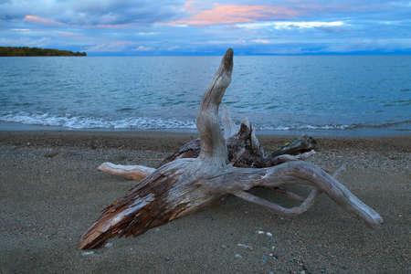 Driftwood on sand beach on sunset background Stock Photo