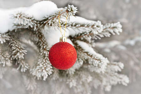 Shiny red Christmas ball on branch of fir covered with snow, beautiful winter background in soft tones, with copy space, closeup view