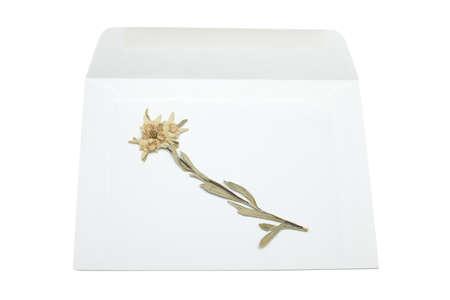 Dried edelweiss flower