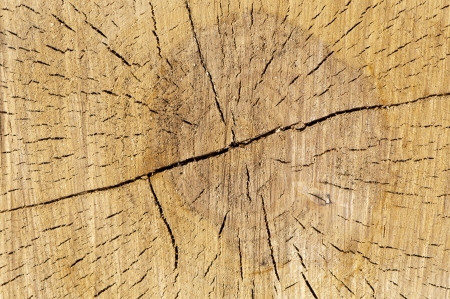 cracked, old, wooden background photo