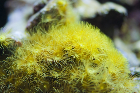 closeup of beautiful yelow coral