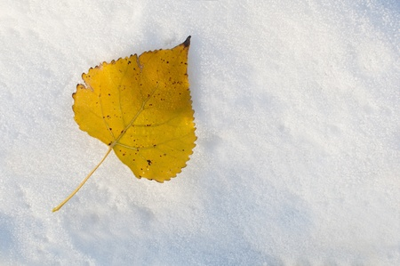 one yellow leaf on the snow Stock Photo - 16564028