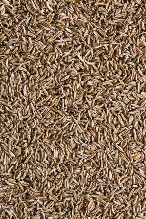 close-up on cumin - background of spices