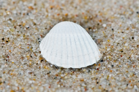 Close-up of a shell lying on the beach photo