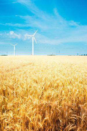 electricidad industrial: campo de grano y el viento de la turbina