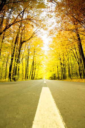 road travel: road among trees in autumn Stock Photo
