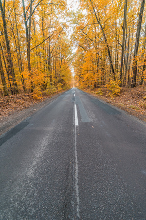 asphalt road in the colorful autumn forest